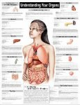 Understanding Your Organs Wall Chart